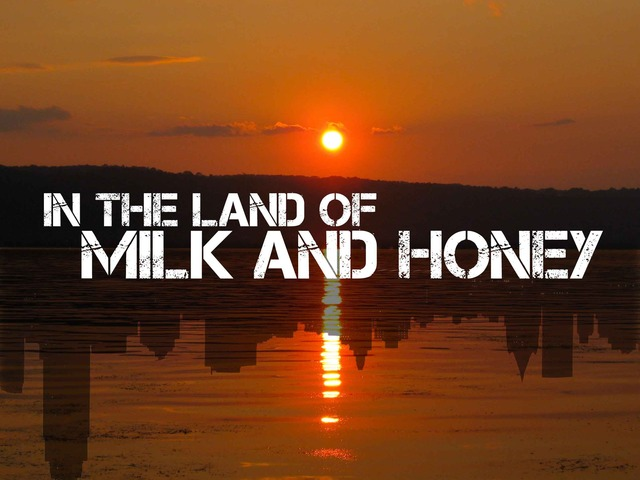 in the land of milk and honey by daniel ferm237n pfeffer