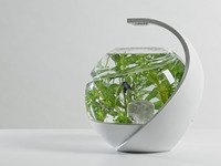 Avo: the self-cleaning tropical fish tank