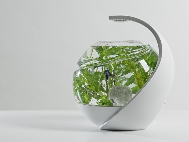 Avo the self cleaning tropical fish tank by susan shelley for Self cleaning fish tank