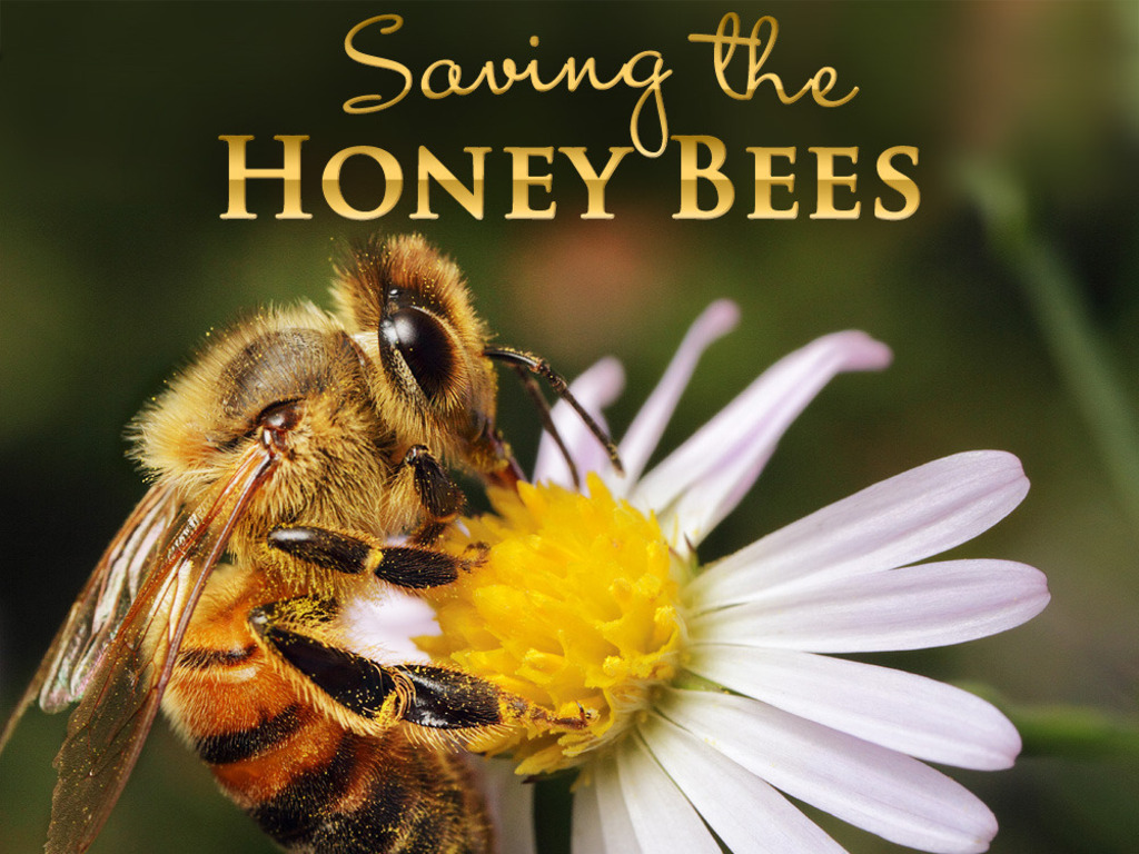 Saving the Honey Bees: Hour of Decision's video poster
