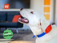 Meet WÜF, The World's Smartest Dog Collar