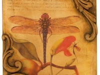 Blueluna Dragonfly Designs