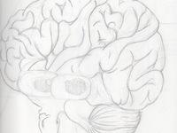 Norbit the Neuron and Brainy Brain: Neuroscience for kids!