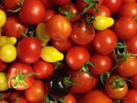 Guerrilla Gardening-Grow rack and High-Intensity Lights