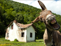 """DONKEYJOTE - """"Sometimes falling is the only way to get home"""""""