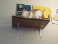 Cat shelf for the spoiled kitties