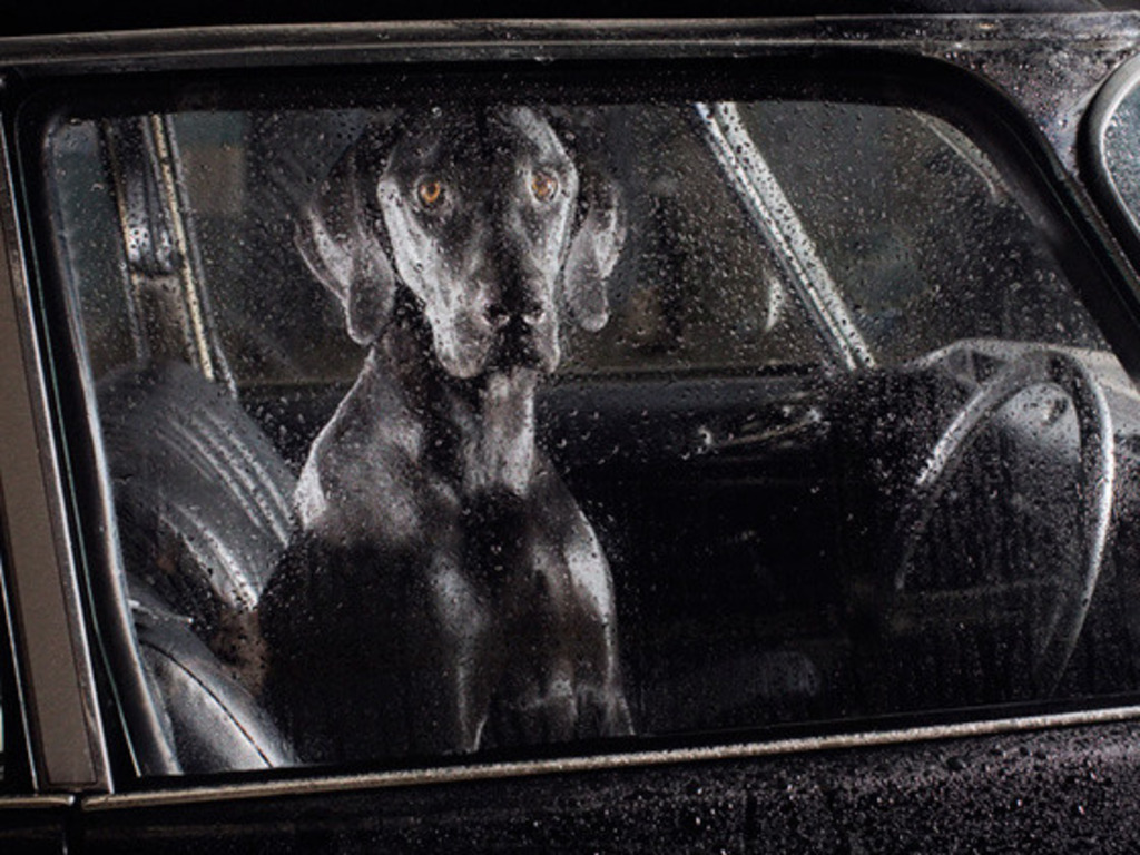 Dogs in cars.  A photography art book's video poster