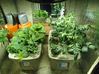 Hydroponic & Aquaponic Homemade Farm