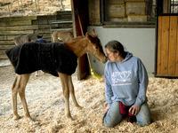 Nurse Mare Foals: Born to Die