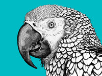 Involution: Highly detailed Animal Art and Prints