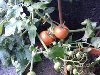 The Organic Fund