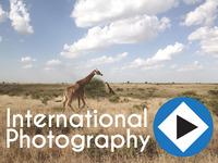 Guardian Media: International Photography