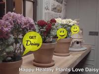 Daisy - Potted Plant Soil Moisture Sensor and App