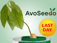 AvoSeedo - Grow your own Avocado Tree with ease!