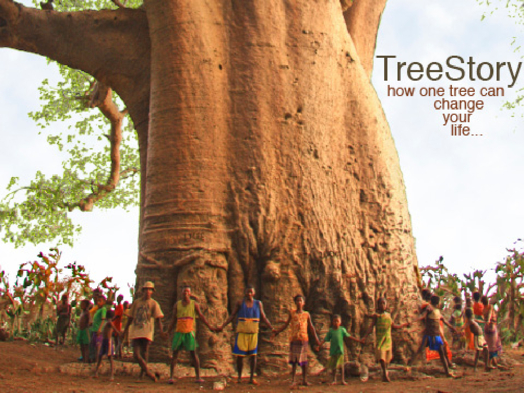 TreeStory:  How one tree can change your life's video poster