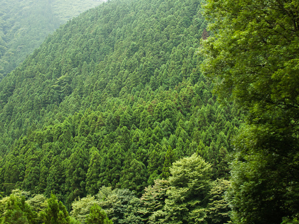 Documentary of Sprawling Japanese Forests and Metropolises's video poster