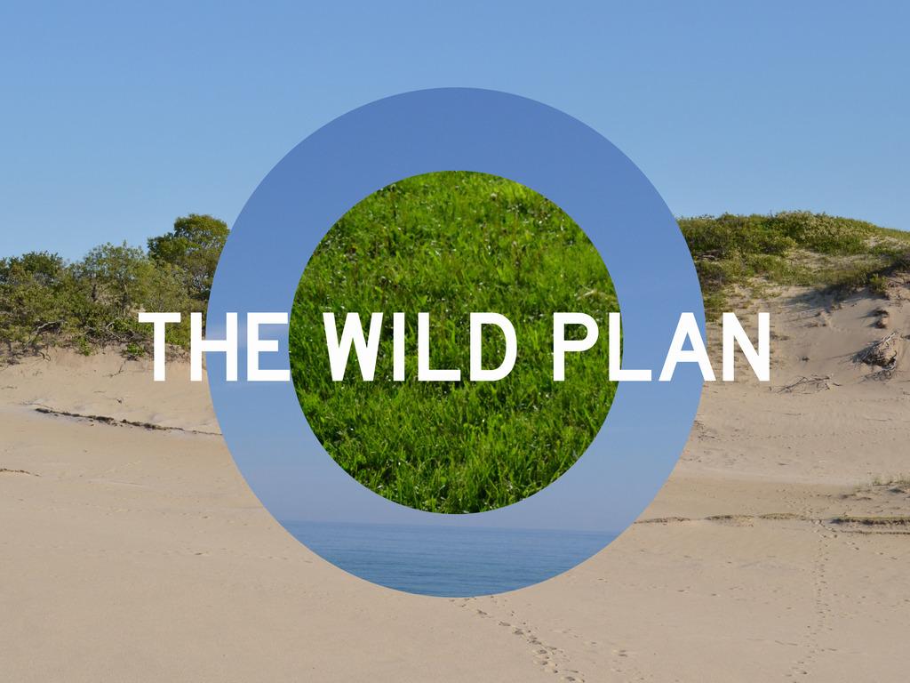 The Wild Plan: performance coast to coast's video poster