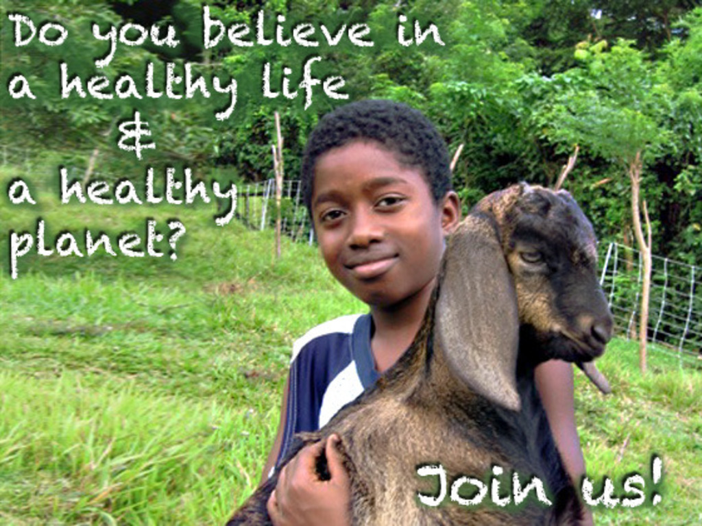 The Grenada Goat Dairy's School Project's video poster