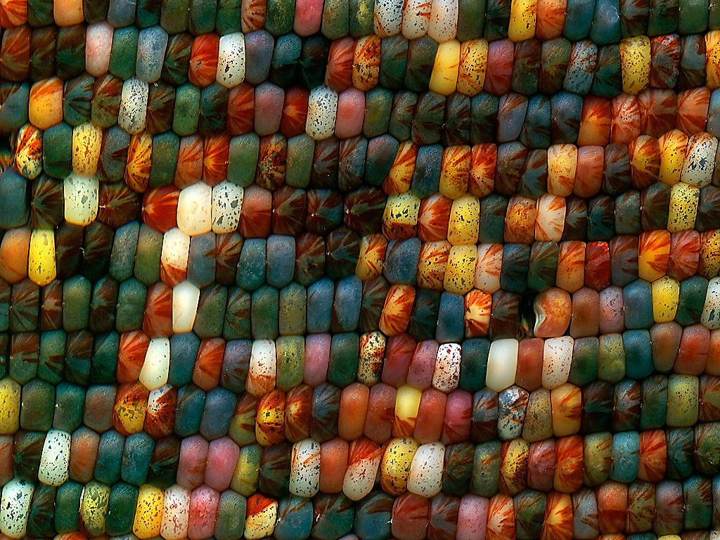 The Corn Crib - a unique print project's video poster