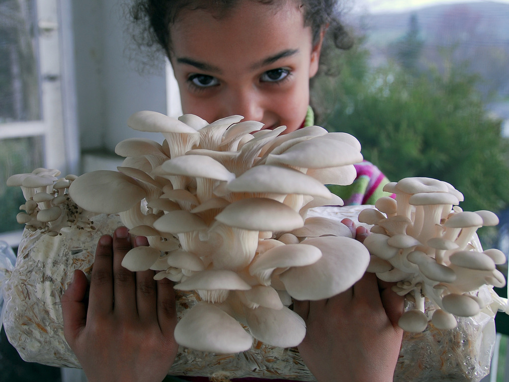 Blue Oyster Cultivation's Favorite Finger Lakes Fungi's video poster