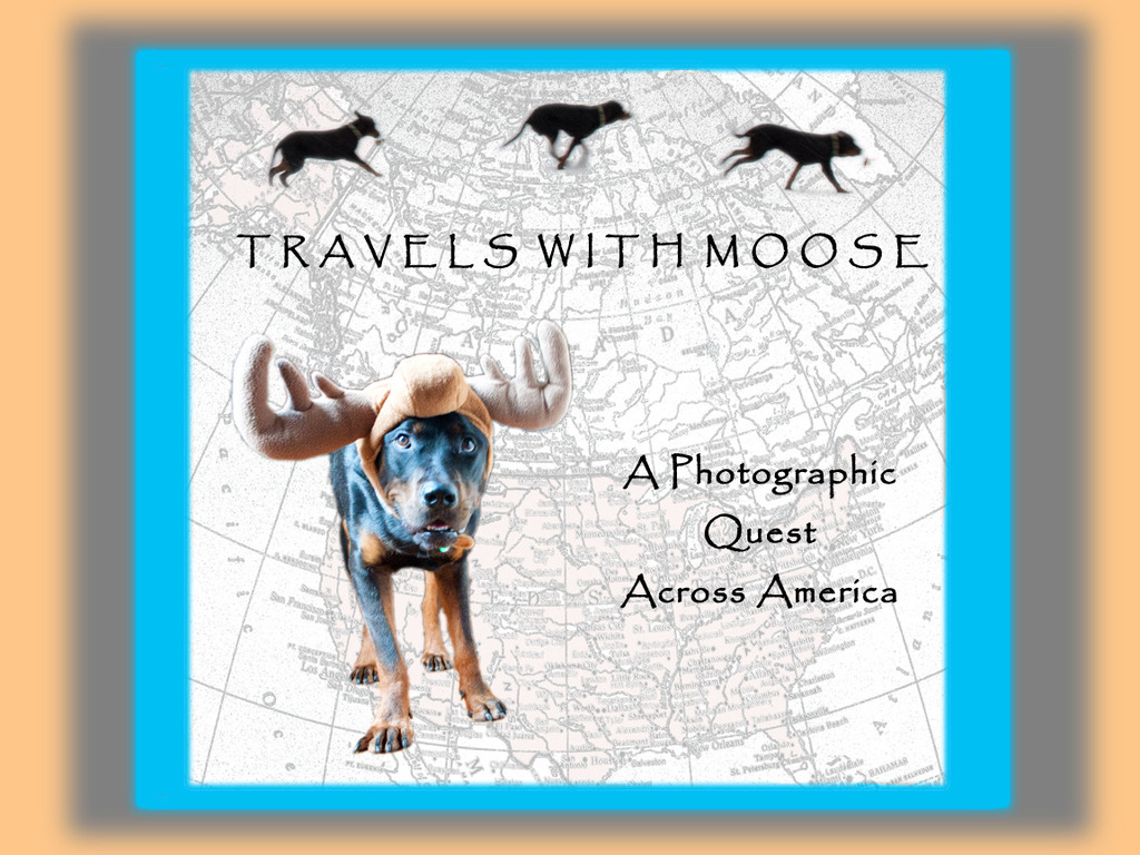 TRAVELS WITH MOOSE's video poster