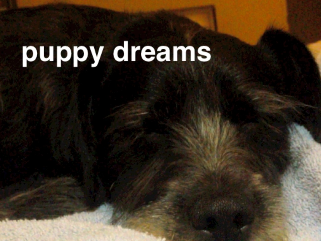 Puppy Dreams's video poster