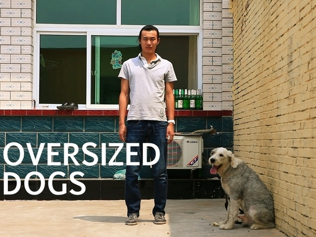 OVERSIZED DOGS: Chinese Dog Laws and People Who Break Them