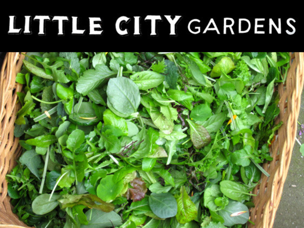 Little City Gardens: An experiment in the economic viability of urban farming's video poster