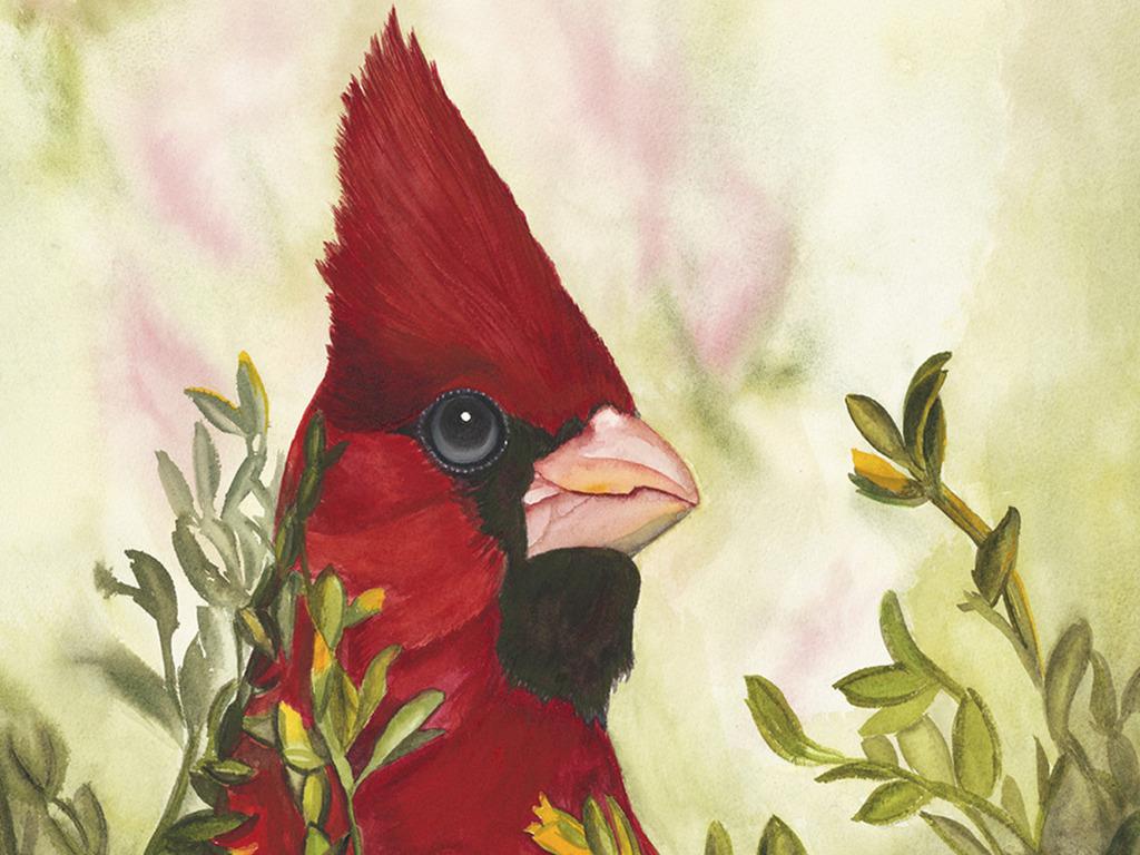 Arizona Native Bird Painting Series's video poster