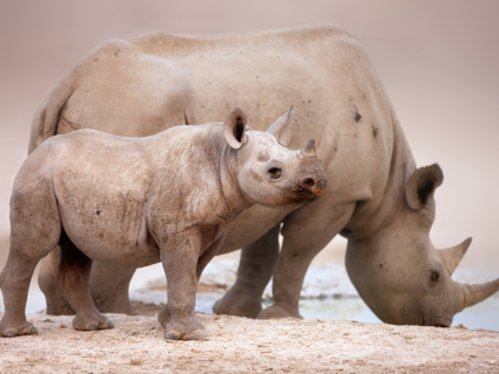 When Paintings Come Alive - The Black Rhino's video poster