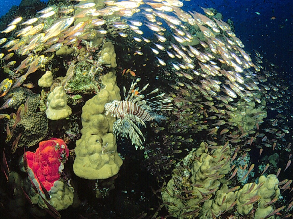 Beneath the Red Sea: A Photographic Archive.'s video poster