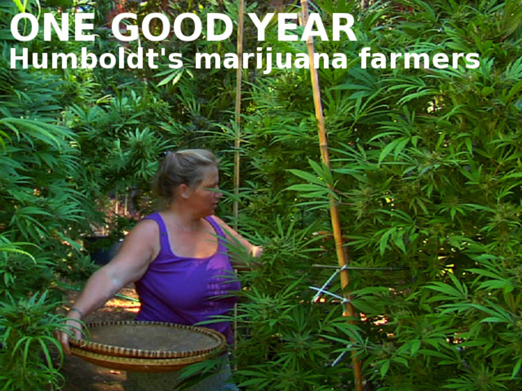 ONE GOOD YEAR People, politics and pot in Humboldt County.'s video poster