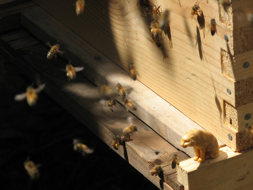 100,000 Honey Bees to Create One-of-a-Kind Album Art       Help Proliferate the Bees!'s video poster