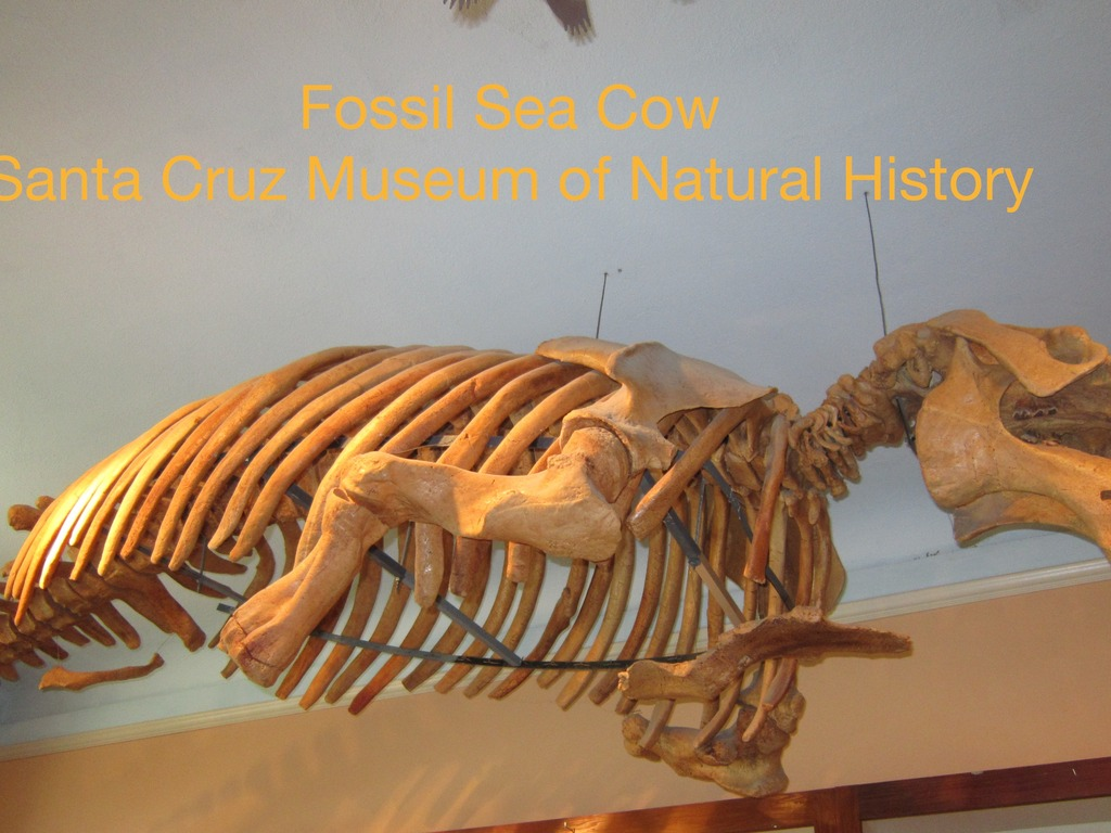 Casting a Fossil Sea Cow's video poster