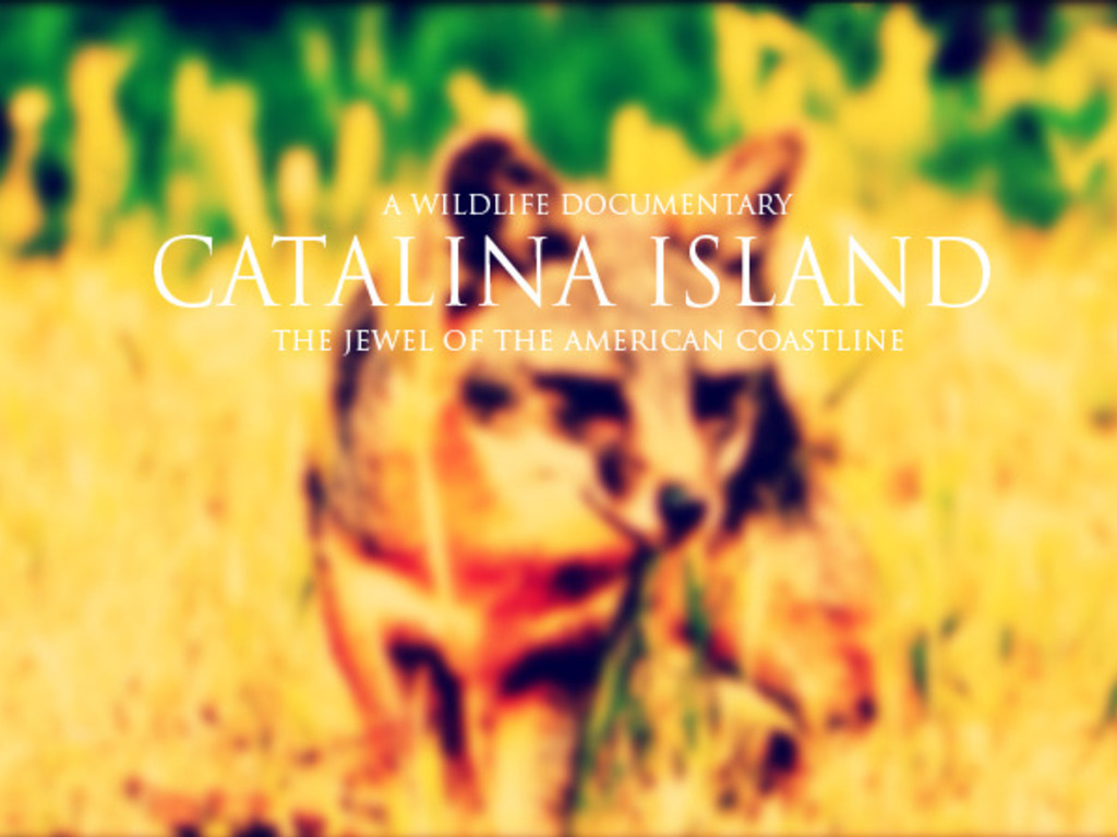Catalina Island: A Wildlife Documentary's video poster