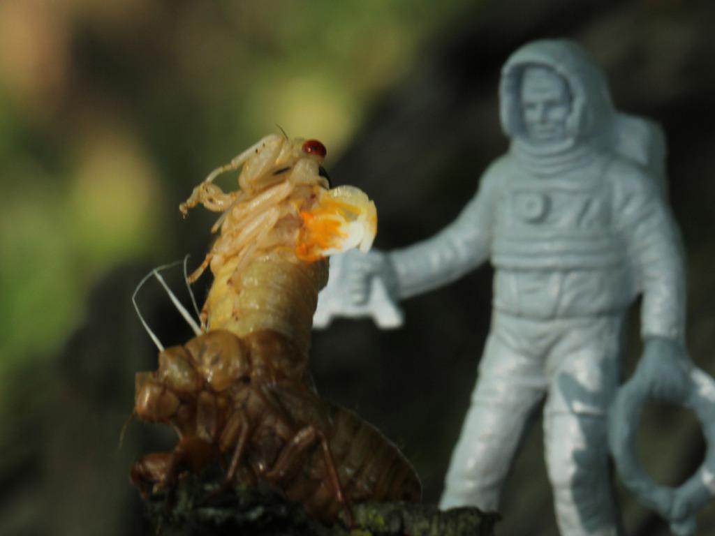 Brood XIX: Cicada Movie's video poster