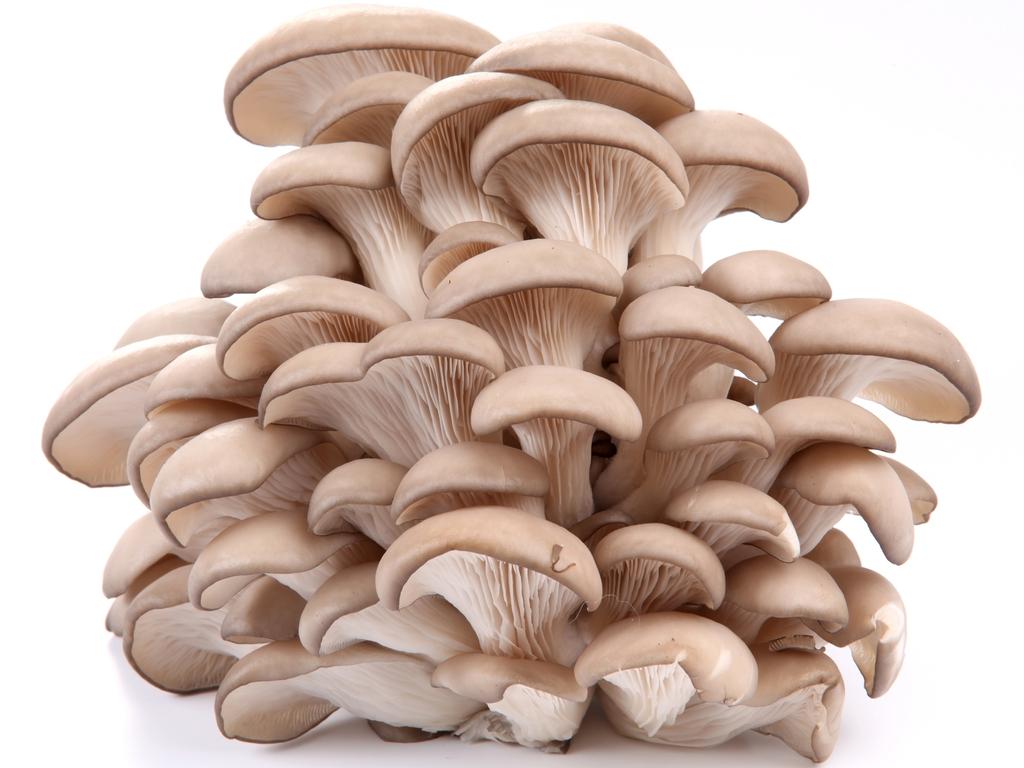 LoGROcal - Sustainable Mushroom Farm's video poster