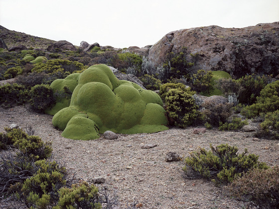 The Oldest Living Things in the World's video poster