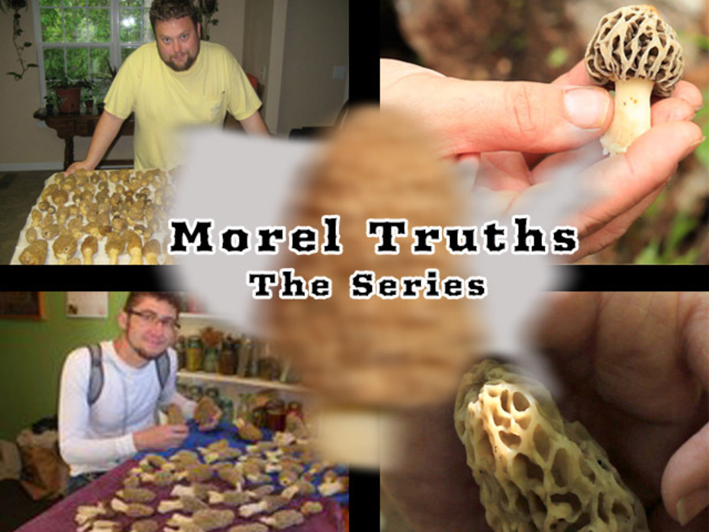 Documentary: Morel Truths (The Mushroom Series)'s video poster