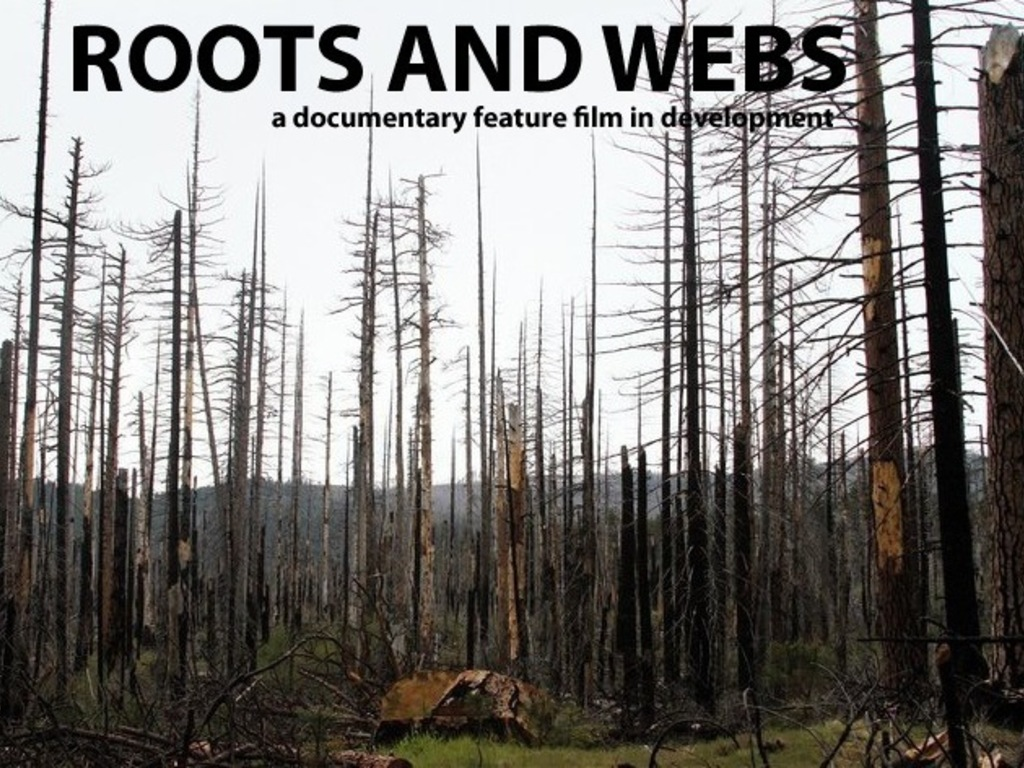 Roots and Webs's video poster