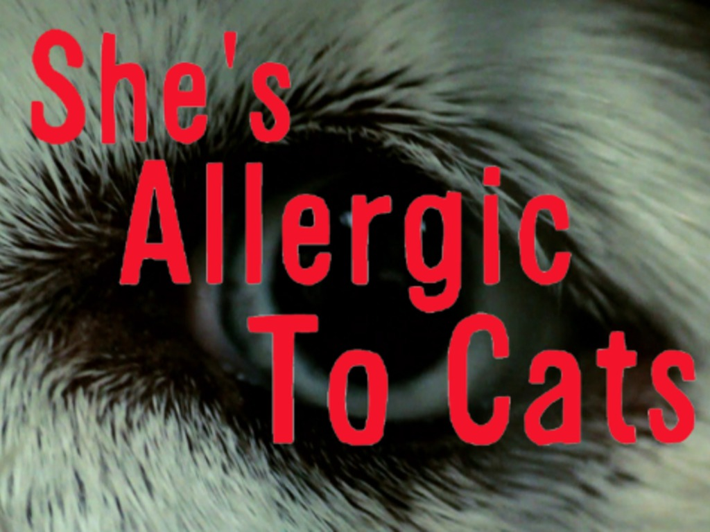 She's Allergic To Cats's video poster