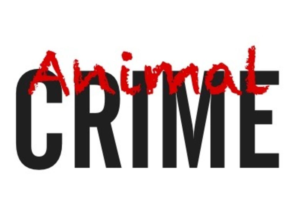 Animal Crime's video poster