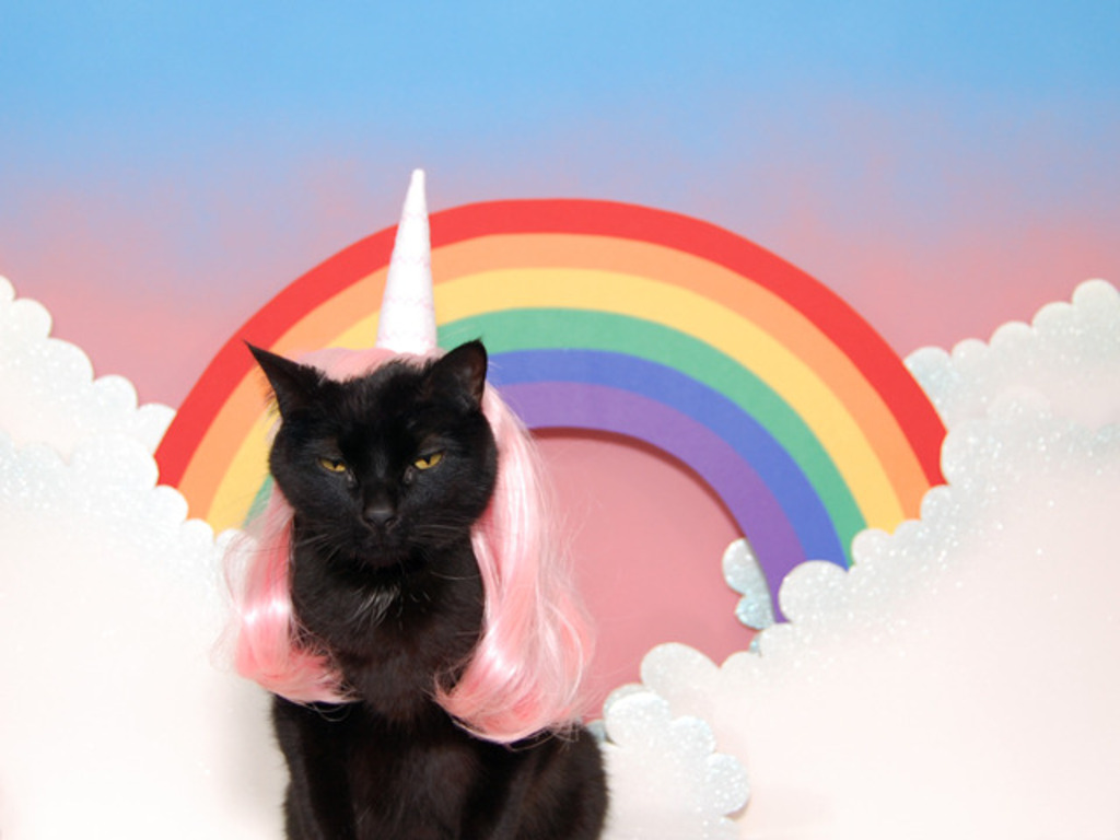 World's Most Super Amazing 100% Awesome Cat Calendar's video poster