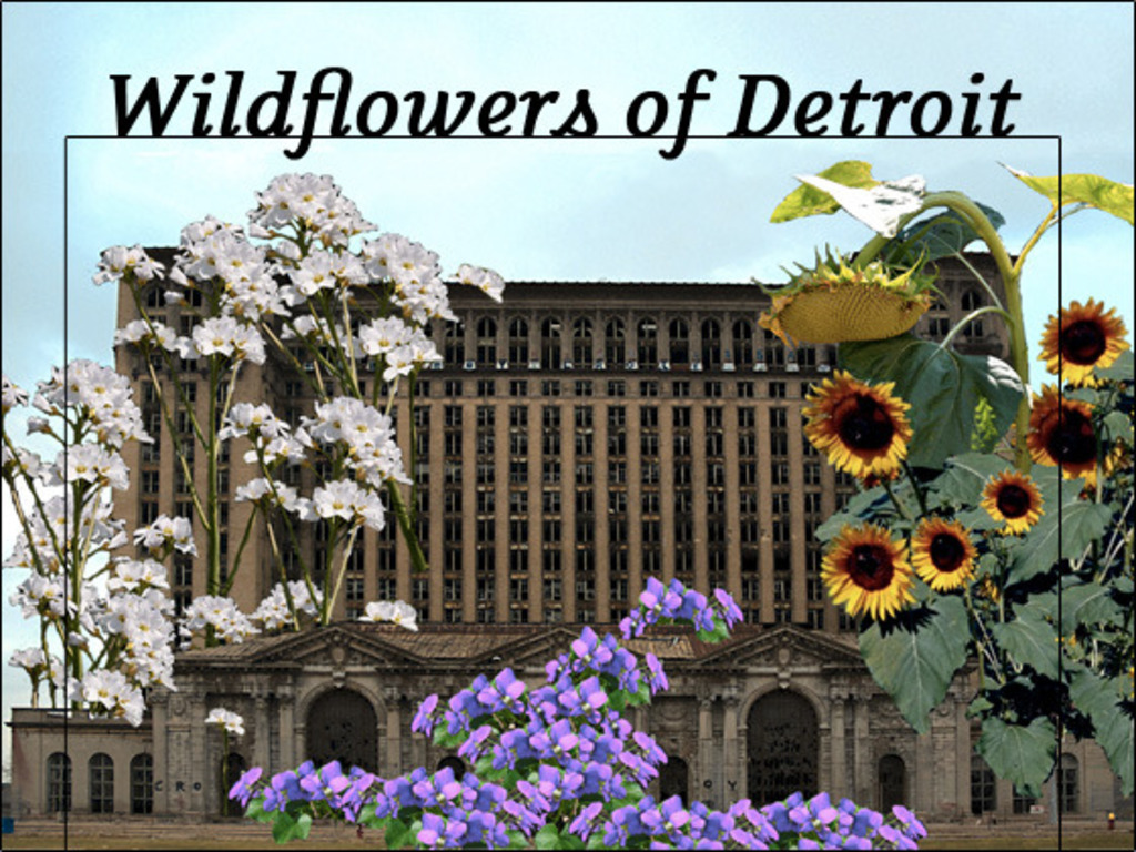 The Wildflowers of Detroit : Community Ecology's video poster