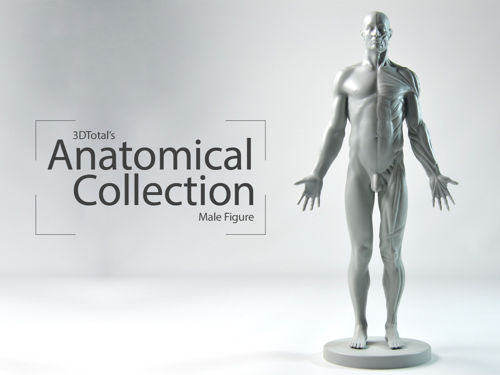 3DTotal's Anatomical Collection: Male figure's video poster