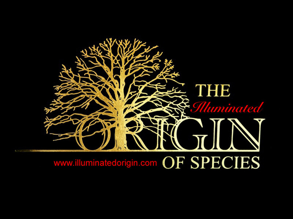 The Illuminated Origin of Species's video poster