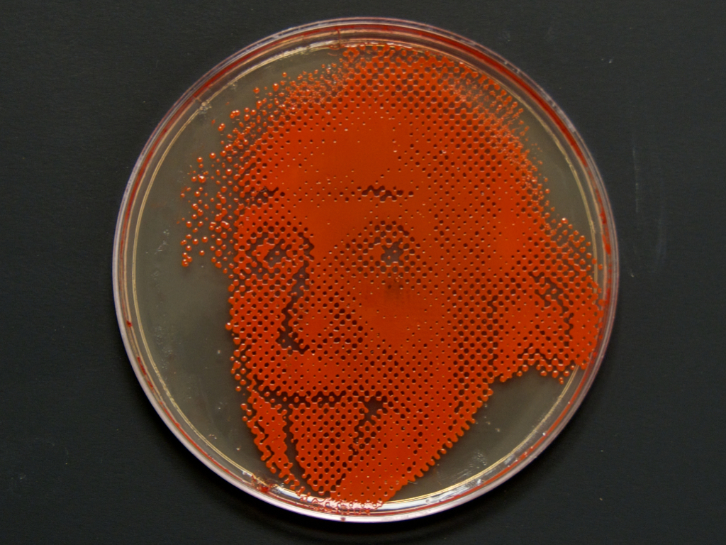 Bacteriography: Photographs Grown in Bacteria (Canceled)'s video poster
