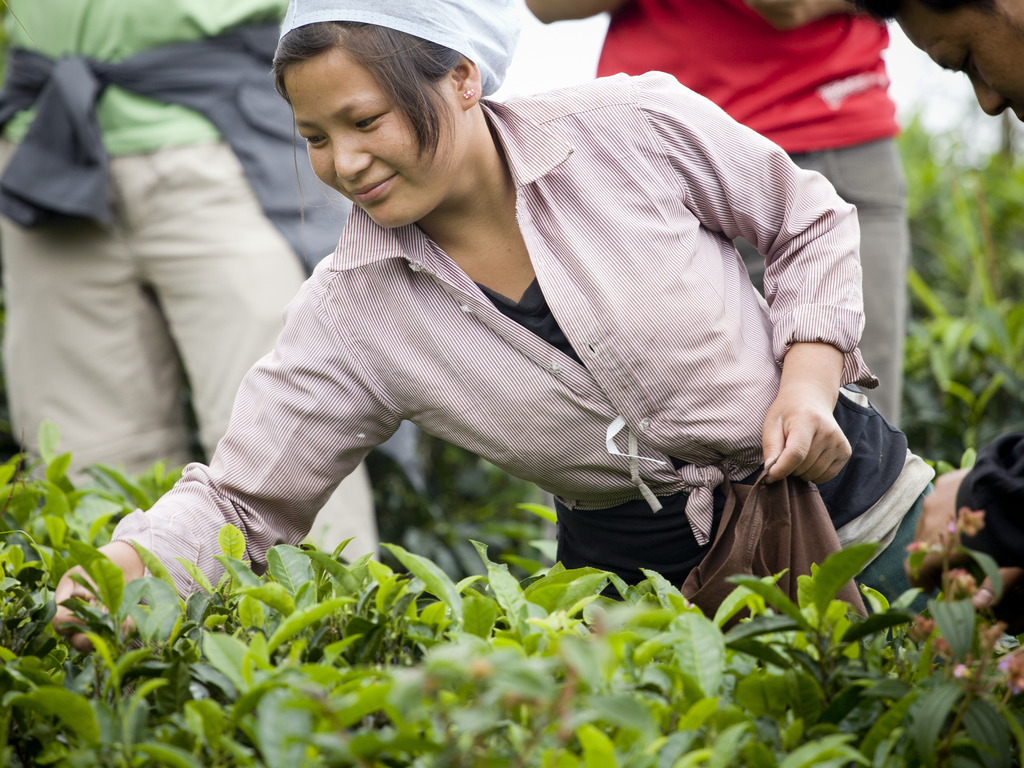 Nepali Tea Traders: Changing the World Through Tea's video poster