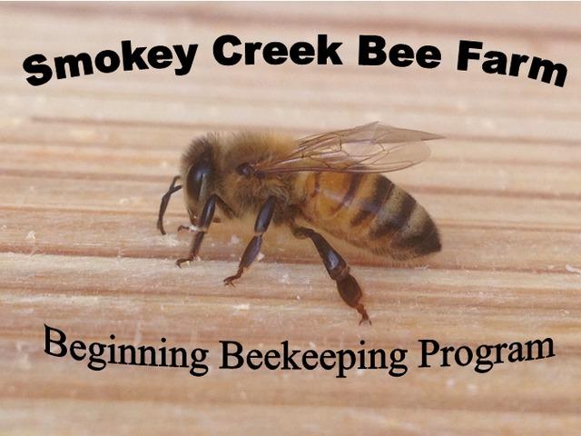 beekeeping for beginners honey bee farming backyard