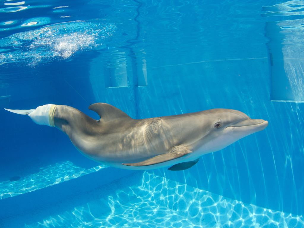 Become part of the Winter the Dolphin Project's video poster